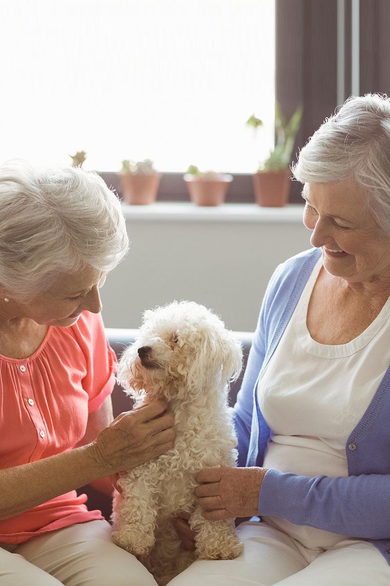 Australia Jewish Seniors Online Dating Service